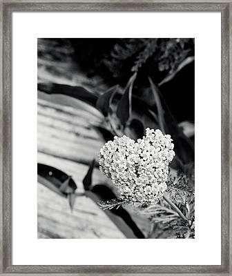 Astilbe Heart Framed Print