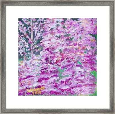 Astilbes Framed Print