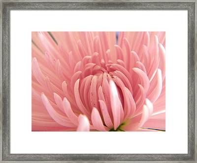 Astra Framed Print by Alyona Firth