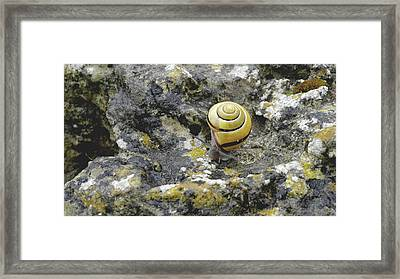 At A Snail's Pace Framed Print by Rona Black