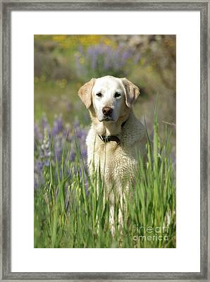 Framed Print featuring the photograph At Attention by Jim and Emily Bush