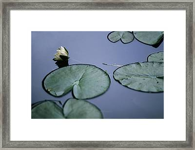Framed Print featuring the photograph At Claude Monet's Water Garden 2 by Dubi Roman