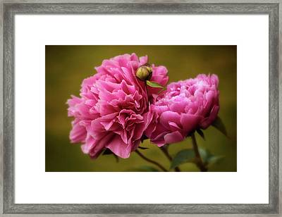 At First Blush Framed Print