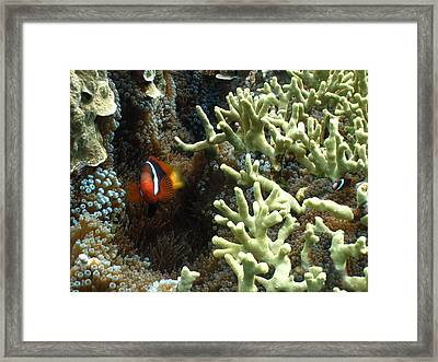 At Home On The Reef Framed Print