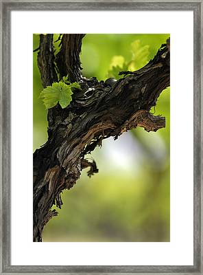 Framed Print featuring the photograph At Lachish Vineyard by Dubi Roman