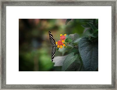 At Last Framed Print by Lucinda Walter