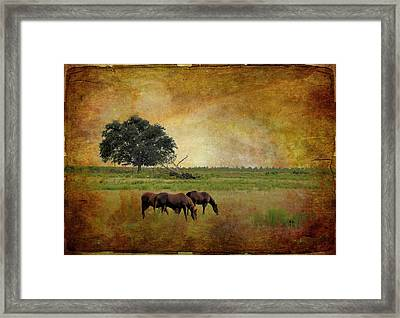 At Pasture Framed Print by Jan Amiss Photography