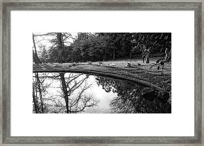 At Peace Framed Print by Donna Blackhall