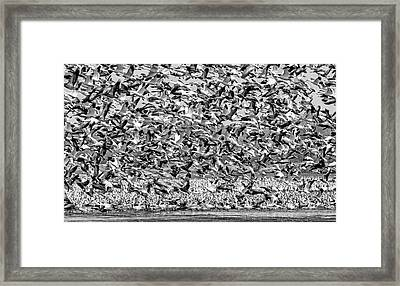At Rest And In Flight Framed Print by Nikolyn McDonald