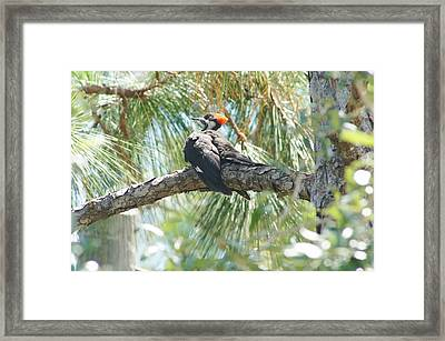 At Rest Framed Print by Lynda Dawson-Youngclaus