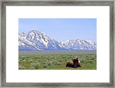 At Rest On The Range Framed Print