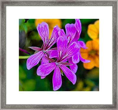 At Summer's End Framed Print