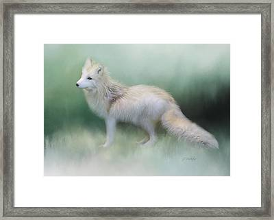 At The Centre - Arctic Fox Art Framed Print by Jordan Blackstone