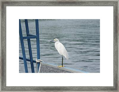 Framed Print featuring the photograph At The Edge by Kim Hojnacki