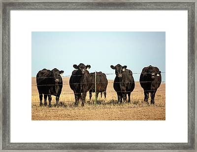 At The Fence Framed Print
