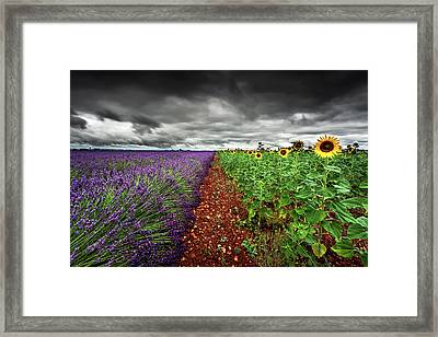 At The Middle Framed Print
