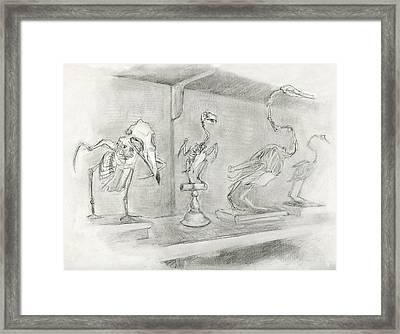 Bird Skeletons Framed Print