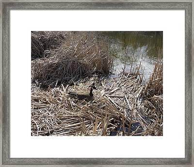At The Pond Framed Print by Heather Hennick