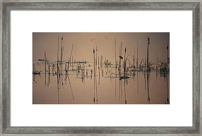 At The Pond Framed Print
