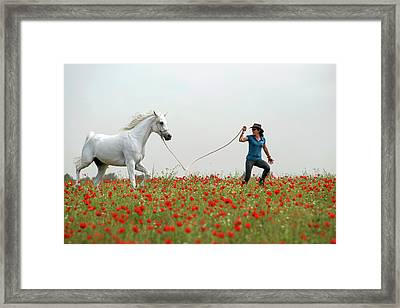 At The Poppies' Field... 2 Framed Print by Dubi Roman