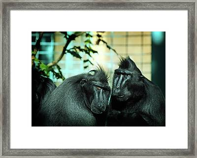 At The Think Tank Framed Print by Rebecca Sherman