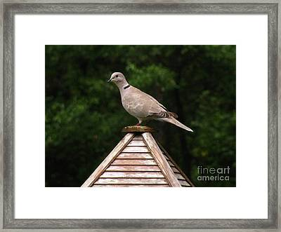 At The Top Of The Bird Feeder Framed Print by Donna Brown