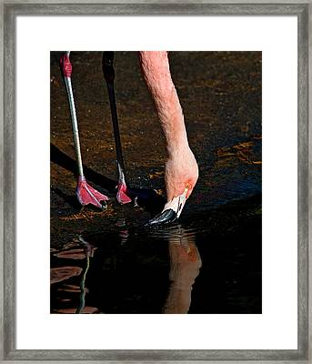 Framed Print featuring the photograph At The Water Hole by Thanh Thuy Nguyen