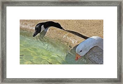 At The Waterhole Framed Print