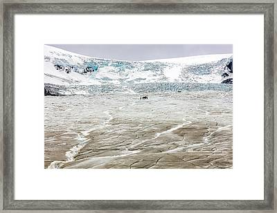 Athabasca Glacier With Guided Expedition Framed Print by Pierre Leclerc Photography