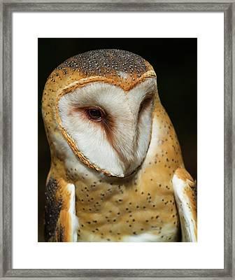 Athena The Barn Owl Framed Print