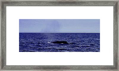 Athena's Whale Framed Print