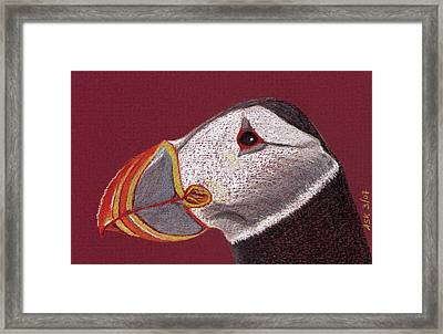 Atlantic Puffin Profile Framed Print
