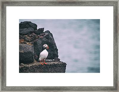 Atlantic Puffin Framed Print by Happy Home Artistry