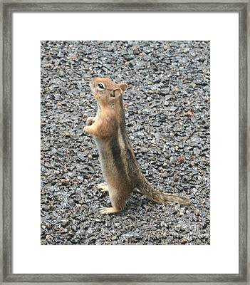 Attention Framed Print by Amy Holmes