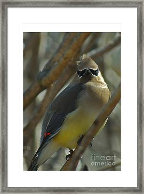 Attitude II Framed Print by Michelle Hastings