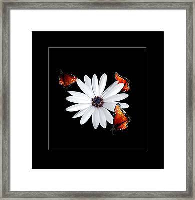 Attraction Framed Print by Richard Gordon
