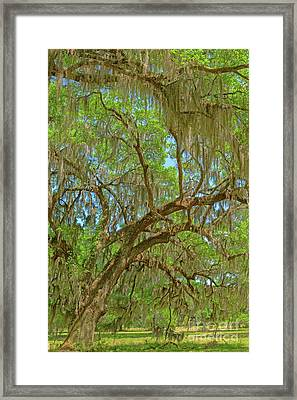 Attraction Framed Print by Steven Dillon