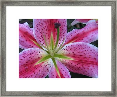 Attractiveness Photography Framed Print