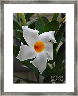 Attractor Framed Print by Skip Willits