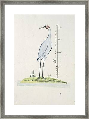 attributed to George Raper Framed Print by MotionAge Designs