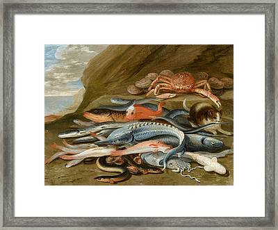 attributed to Still Life with Fish Framed Print by Jan van Kessel