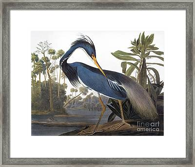 Audubon: Heron, 1827 Framed Print by Granger
