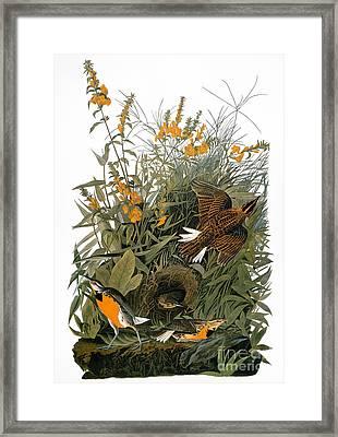 Audubon: Meadowlark Framed Print by Granger