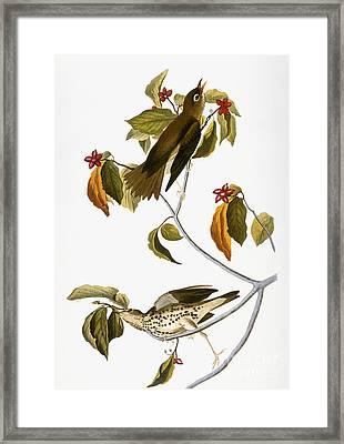Audubon: Thrush Framed Print by Granger
