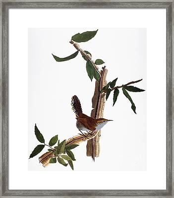 Audubon: Wren, (1827-38) Framed Print
