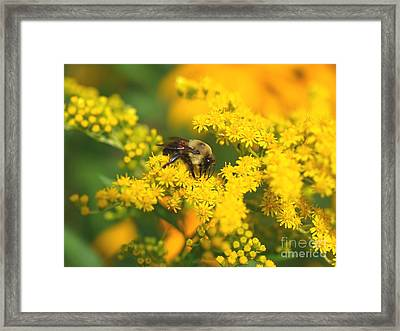 August Bee Framed Print by Susan  Dimitrakopoulos