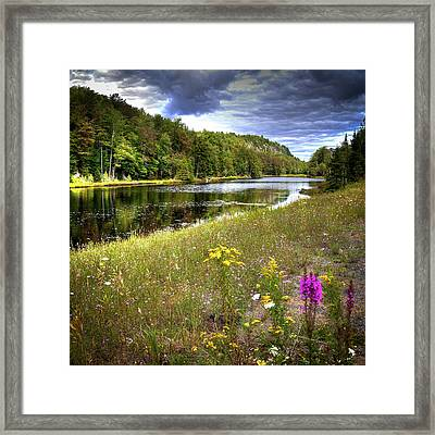 Framed Print featuring the photograph August Flowers On The Pond by David Patterson