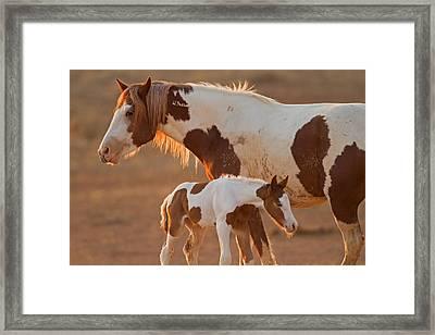 August Foal Framed Print