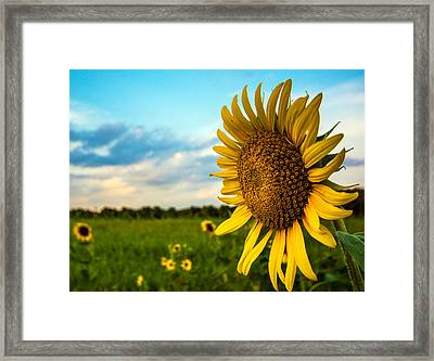 August Icon  Framed Print