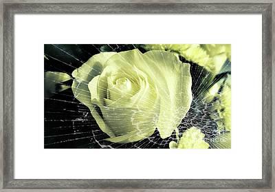 Aunt Edna's Rose Framed Print